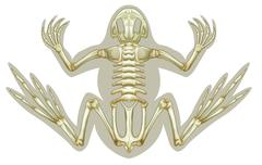 Frog skeletal system Stock Illustration
