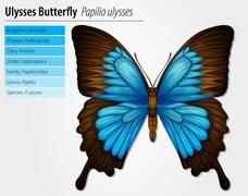 Blue Mountain Swallowtail - stock illustration