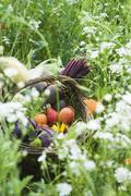 Stock Photo of Basket of fresh produce
