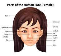 Human face - stock illustration