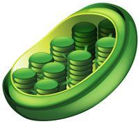 Chloroplast - stock illustration