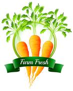 Fresh carrots with a farm fresh label - stock illustration