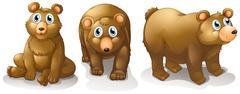 Three brown bears - stock illustration
