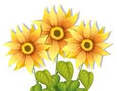 Stock Illustration of Blooming sunflowers