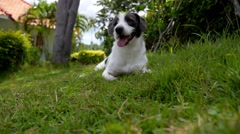 Lovely Dog Relaxing in the Garden. Slow Motion. Stock Footage