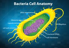 Bacteria cell structure Stock Illustration