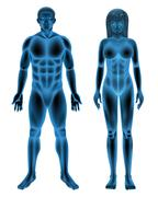 Male and female human body Stock Illustration