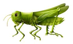 Grasshopper - stock illustration