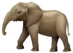 African elephant - stock illustration