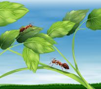 Ants Stock Illustration