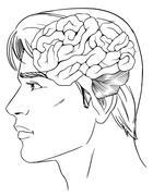 The human brain - stock illustration