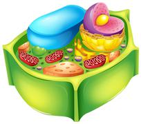 Plant cell - stock illustration