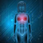 Human Breast - stock illustration