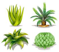 Cactus plants Stock Illustration