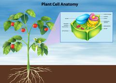 Anatomy of the plant cell - stock illustration