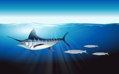 Atlantic blue marlin - stock illustration