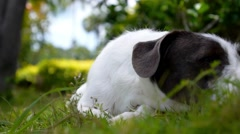 Adorable Puppy Dog in the Yard. Slow Motion. Stock Footage