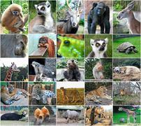 collage photos of some wild animals - stock photo