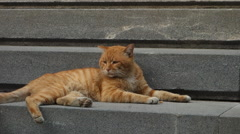 Cat resting on stone steps Stock Footage