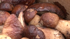 Wild mushrooms in a crib close-up brown Stock Footage
