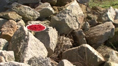 Plate of wolfberry berries on the rocks Stock Footage