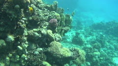 Colorful fishes on reef 11 dahab Stock Footage