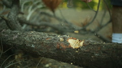 Chopping wood axe timelapse chop up firewodd Stock Footage