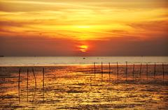 Stock Photo of Sunset view at wetland sea coast