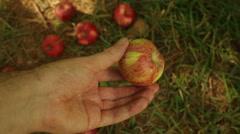 Heirloom apple orchard Stock Footage
