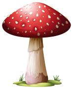 Royal Agarics Stock Illustration