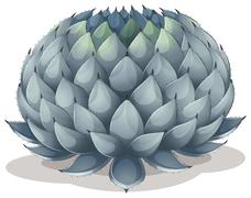 Agave parryi - stock illustration