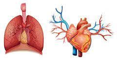 Stock Illustration of Heart organ