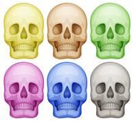 Colorful skulls Stock Illustration