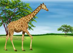 Giraffe Stock Illustration