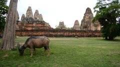 Ox Eating Grass, Stone Wall with Temple Remains - Angkor Wat Stock Footage