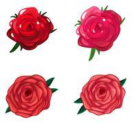 A rose flower Piirros