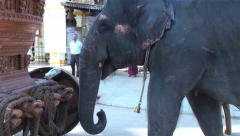 Special trained elephant is pushing the chariot with the trunk Stock Footage