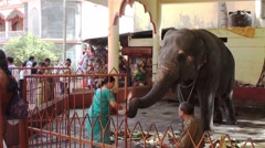 The blessings of the sacred elephant Stock Footage