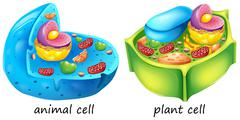 Animal and plant cells Stock Illustration