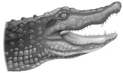 A grey crocodile Stock Illustration