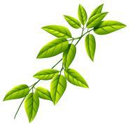 A leafy plant - stock illustration