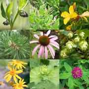 medicinal plants - stock photo