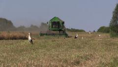 Combine harvest dry pea plants and stork birds Stock Footage