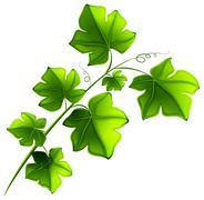 Green plant - stock illustration