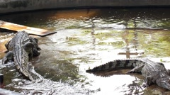 Crocodiles in the Zoo. Thailand. Stock Footage