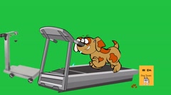 Dog Exercising on Treadmill:  Looping Stock Footage