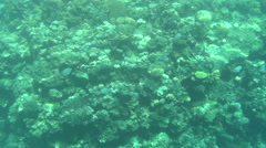 Colorful fishes on reef 13 dahab Stock Footage