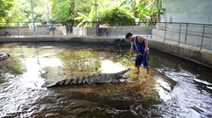 Show of Crocodiles with Crocodile Trainer. Thailand. Stock Footage