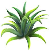 A dwarf agave plant - stock illustration