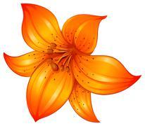 An orange lily flower - stock illustration